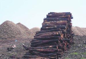madera quemada