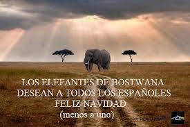 elefante felicitacion