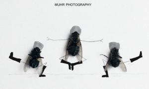 bailarines mosco vitas - Muhr